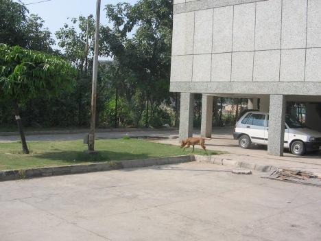 "Teacher Transit Hostel, Mukherjee Nagar, New Delhi, India. The place that I called ""home"" between 2009-2013"